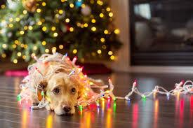 holiday picture with lights and dog