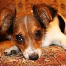 Small Mixed Breed Dog Info
