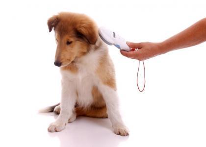 how do dog microchips work