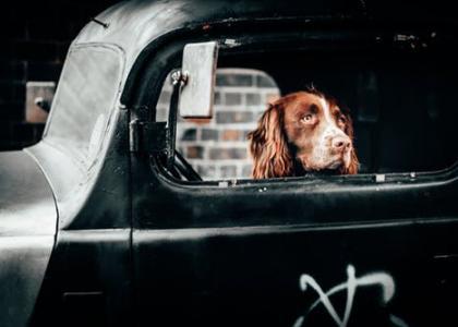 dogcar