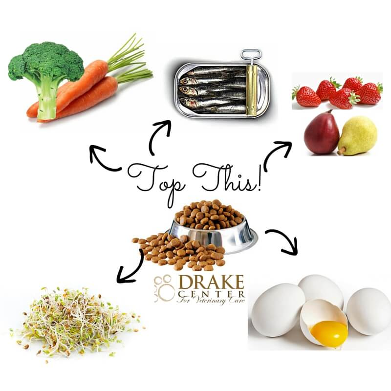 Top This! 5 Healthy Dog Food Toppers